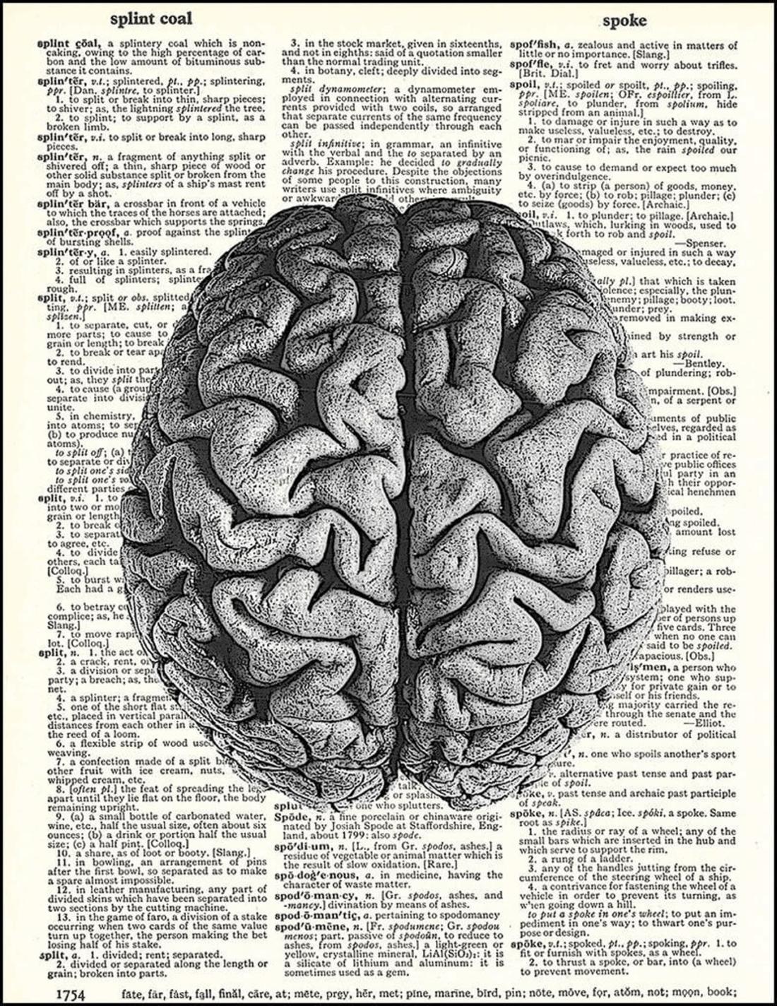 Así se modifica tu cerebro cuando lees